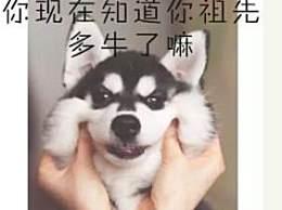 神秘军犬捕杀is头目 狗是人类最忠诚的朋友