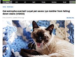家猫救下1岁男孩 小猫出爪相救太机智