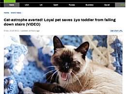 家猫出爪救1岁男孩 助男孩顺利脱险