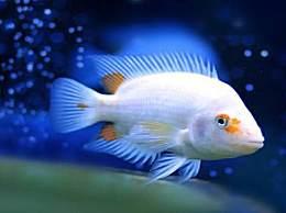 新鱼怎么喂养 新鱼入缸多久能喂食