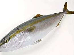 世界上最贵的鱼排行榜 第一名曾卖出450万天价