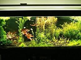 鱼缸水变绿是怎么回事 鱼缸水变绿怎么办