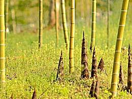 怎样去掉竹笋的涩味?冬笋去涩味方法介绍