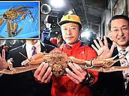 世界上最贵螃蟹 日本螃蟹拍出500万日元天价