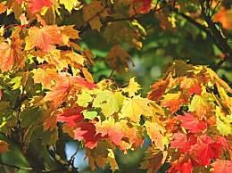 塔川和婺源秋景哪个更好?这两个地方几月去最好?