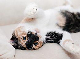哪些情况下会导致猫咪便血?猫咪软便便血怎么办