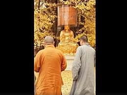 西安千年银杏树为什么会火?