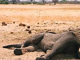 上百头大象死于干旱 津巴布韦遭遇史上最严重旱灾