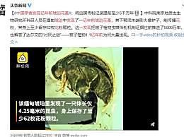 中国学者发现亿年前琥珀花蚤 虫媒传粉记录提前至少5千万年