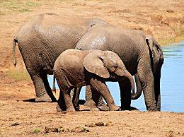 大象死于致命干旱 津巴布韦现严重旱灾