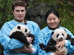 比利时大熊猫被命名 取名宝弟宝妹你觉得好听吗
