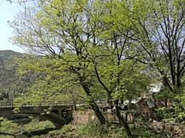 河南必玩的古村落 景色堪比5A景区