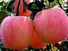 我国的苹果品种有哪些?哪个品种的苹果最好吃?