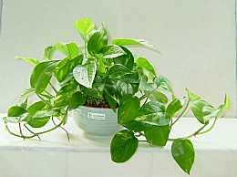 办公室摆放什么植物好?适合放办公室的小绿植