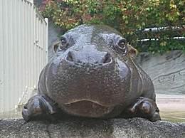 盘点世上最懒的十大动物 世界上最懒动物前十名