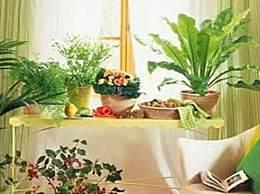 餐厅放什么植物风水好 餐厅植物风水禁忌