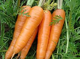 含维生素c最高的食物有哪些 十大高维C常见食物一览表