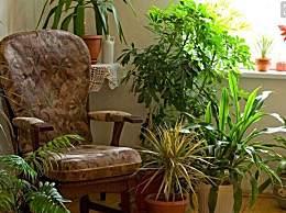 客厅养什么花比较好?客厅养花风水上有什么讲究