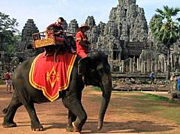 吴哥窟禁止骑大象 不能再藉大象营利了