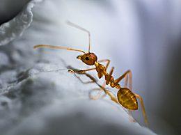 家里有蚂蚁怎么办?五种处理方法让你摆脱蚂蚁烦恼