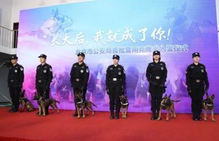 首批警用克隆犬入警 6头警用克隆犬正式入警!
