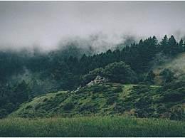 珠海一公园出现眼镜王蛇!园方回应称会定期撒硫黄粉