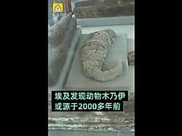 2000年前动物木乃伊被发现 堪称考古界的奇迹