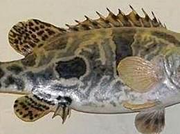 什么品种的淡水鱼最好吃?最好吃的淡水鱼排名
