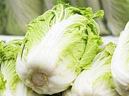 大白菜价格现低谷 大白菜现在价格是多少何时回升