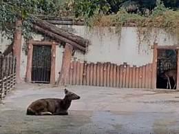 重庆动物园门票多少钱?重庆动物园中动物种类一览