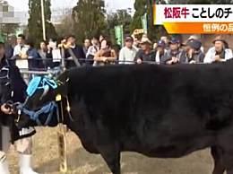 1头牛卖出168万人民币 日本拍出天价