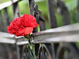 感恩节送什么花好?各种花的花语寓意分享