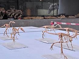 河北发现恐龙新物种 体长仅有30厘米