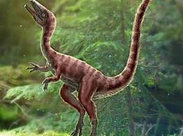 河北发现恐龙新物种 体长约30厘米但动作迅猛