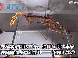 河北发现恐龙新物种 小型恐龙行动迅速