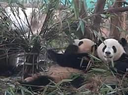 12月成都免费景点来了!看熊猫再也不用掏钱了!
