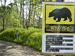 日本频现熊出没 黑熊肆虐常常攻击人类