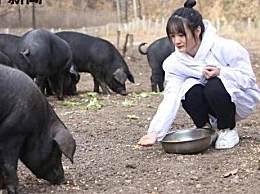 300头黑猪做陪嫁 这可能是当今最奢华的陪嫁