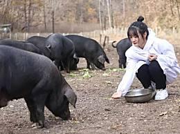 300头黑猪做陪嫁 女大学生毕业后回老家当猪倌