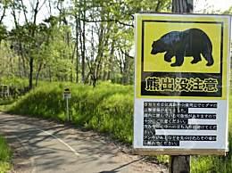 日本频现熊出没 偷吃东西还袭击人太猖狂