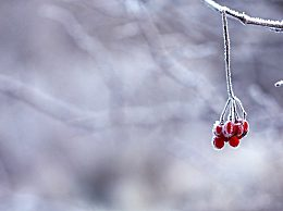 描写初雪的唯美诗句有哪些?描写初雪的古诗句赏析