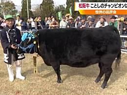 天价!日本松阪牛拍出168万元