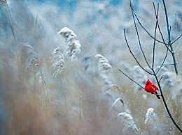 今日大雪朋友圈说说心情语录 大雪节气早安暖心祝福语