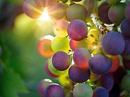 葡萄籽有副作用吗 什么人不能吃 葡萄籽的饮食禁忌和坏处