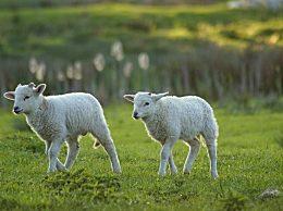 羊胎素有副作用吗 长期用羊胎素的4个危害8个禁忌