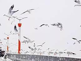 昆明下雪上热搜 昆明终于喜提降雪