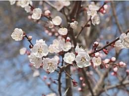 冬天赏梅花去哪儿好?盘点中国四大赏梅花的地方