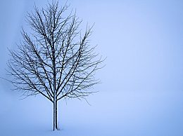 大雪节气唯美句子有哪些?大雪问候语思念的话大全