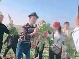 200亩萝卜被拔光 老农菜地遭上千人薅羊毛