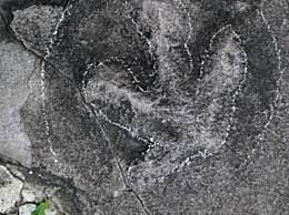 避暑山庄原来是侏罗纪公园 石板路惊现恐龙足迹